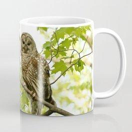 Barred owl mother and child Coffee Mug