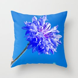Blue fresh cornflower on the blue background Throw Pillow