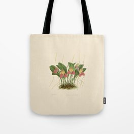 File:R. Warner & B.S. Williams - The Orchid Album - vol 01 - plate 005 Tote Bag