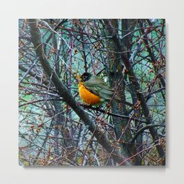 Red Robin - Round Robin - Jeronimo Rubio Photography 2016 (All Over) Metal Print