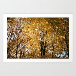 Golden Leaves Art Print