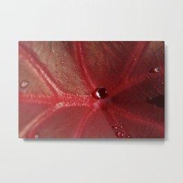 Leaf Red with Water Droplet Metal Print