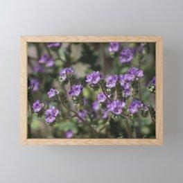 Closeup of Salt Heliotrope Wildflower 2 Coachella Valley Wildlife Preserve Framed Mini Art Print