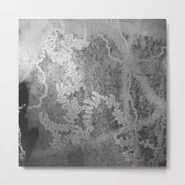 Beautiful snail trails on bark in black and white Metal Print