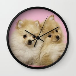 Pink Pomeranian Brothers Wall Clock