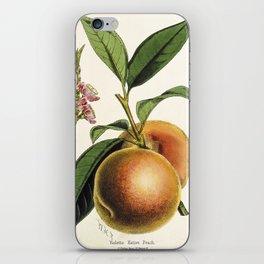 A peach plant - vintage illustration iPhone Skin