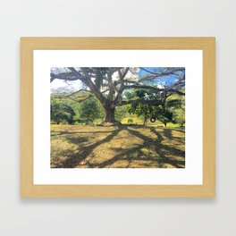 Tire Swing in a Tropical Place Framed Art Print
