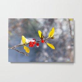 Red Berries in the Snow Metal Print