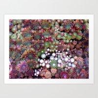 Sempervivums Art Print