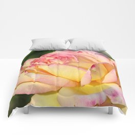 Rose Pink Yellow Comforters