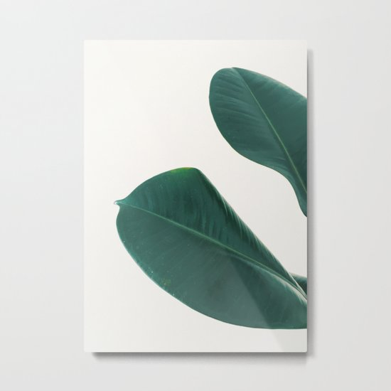 Rubber Fig Leaves I Metal Print