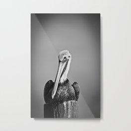 Brown Pelican -mono Metal Print