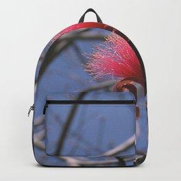 Shaving Brush Tree - Pseudobombax ellipticum Backpack