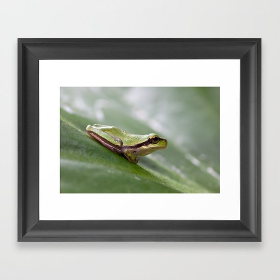 Mediterranean Tree Frog 1095 Framed Art Print