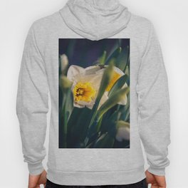 Daffodils from my floral photography collection (mural) Hoody