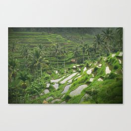 Balinese rice terraces Canvas Print