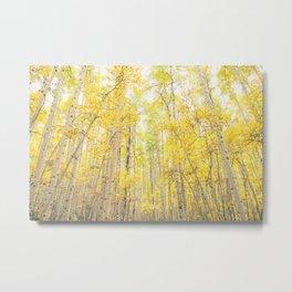 Fall Aspen Trees Metal Print