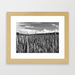Fields of wheat, Norway Framed Art Print