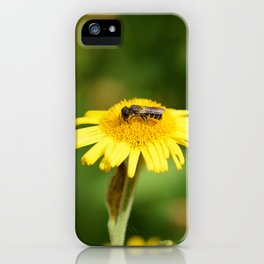 Small bee on yellow fleabane iPhone Case