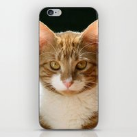 charlie iPhone & iPod Skins featuring Charlie by B Hoagland