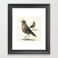 Chilean Fieldfare Framed Art Print