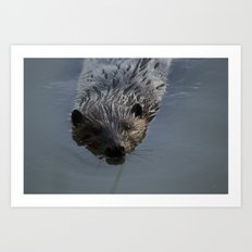 Beaver Shots Art Print