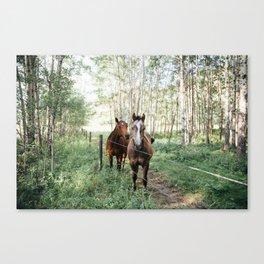 Summer Horses Canvas Print
