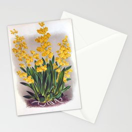 Vintage Oncidium Cheirophorum Golden Yellow Orchids Stationery Cards