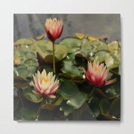Waterlily Pond Metal Print