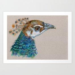 Peacock CC006 Art Print