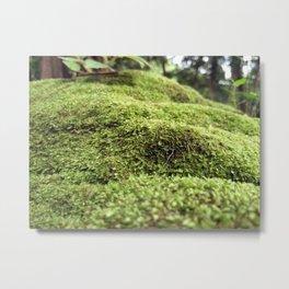 Moss forest 2 Metal Print