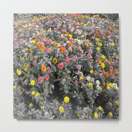 Flower in garden outdoor of home at adorn to color show Metal Print