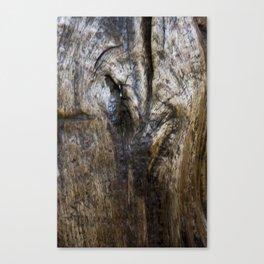 waxed oak 1 Canvas Print