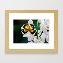 Tamil Lacewing Butterfly on Pink Orchids Framed Art Print