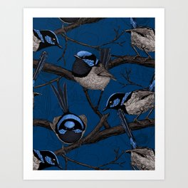 Night fairy wrens  Art Print