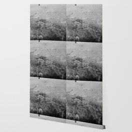 4x5 film photograph Wallpaper