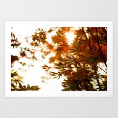 Wind in the Maple Art Print