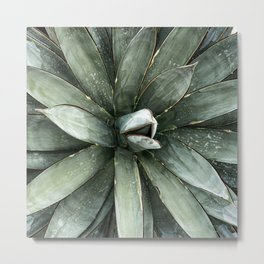 Cactus Decor // Dusty Blue Green Succulent Leaves Desert Square Photograph Metal Print