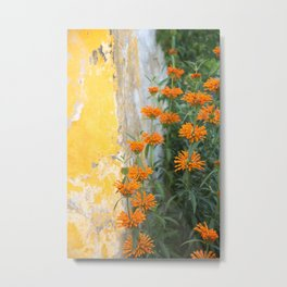 Lion's Tail and Yellow Wall, Óbidos, Portugal Metal Print