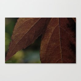 so ill in the fall Canvas Print
