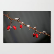 Ruby Red, Christmas, Winter Canvas Print