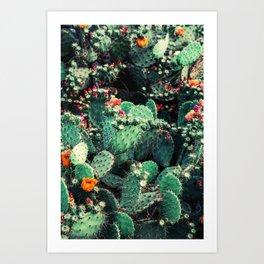 Cactus Garden - Succulent, Plants Photography Art Print