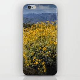 Wild Desert Flowers Blooming in the Anza-Borrego Desert State Park, Southern California iPhone Skin