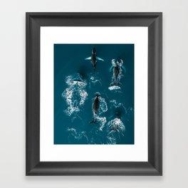 Humpback whales in the arctic ocean - Wildlife Aerial Framed Art Print