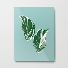 Calathea White Fusion Tropical Houseplant Art Metal Print