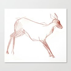 Little Doe Canvas Print