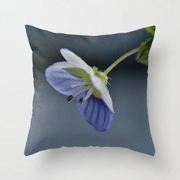 Splendid Throw Pillow