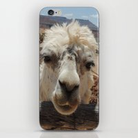 lama iPhone & iPod Skins featuring Lama  by Ricarda Balistreri