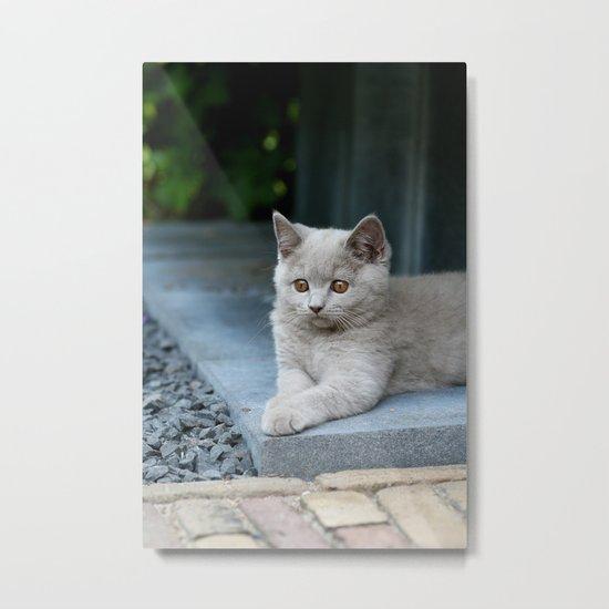 Bikkel the cat ! Metal Print