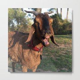 Happy Wet Goat Metal Print